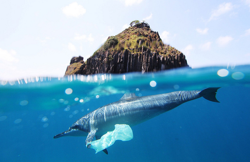 plastic bag at sea